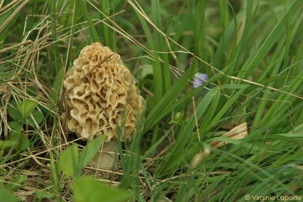 Les champignons  023b8a24