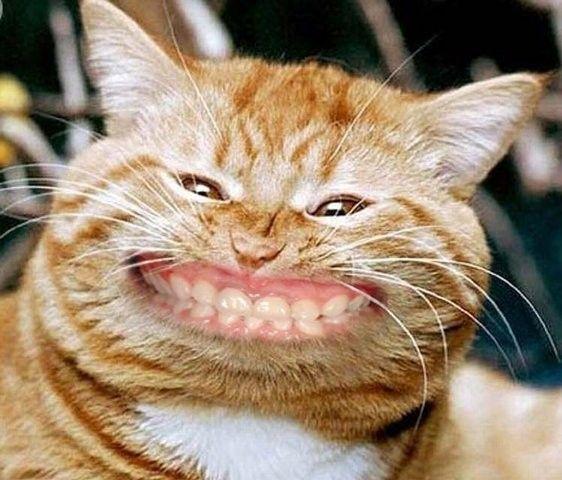 """Résultat de recherche d'images pour """"grimace animaux"""""""