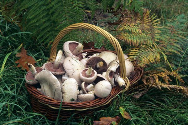 Les champignons  7173425e
