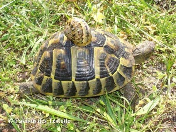 la tortue 822b103e
