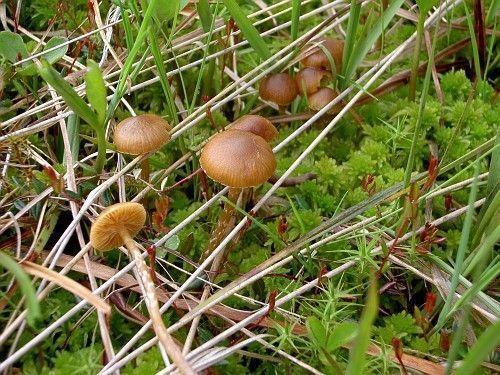 Les champignons  Dbfe6480
