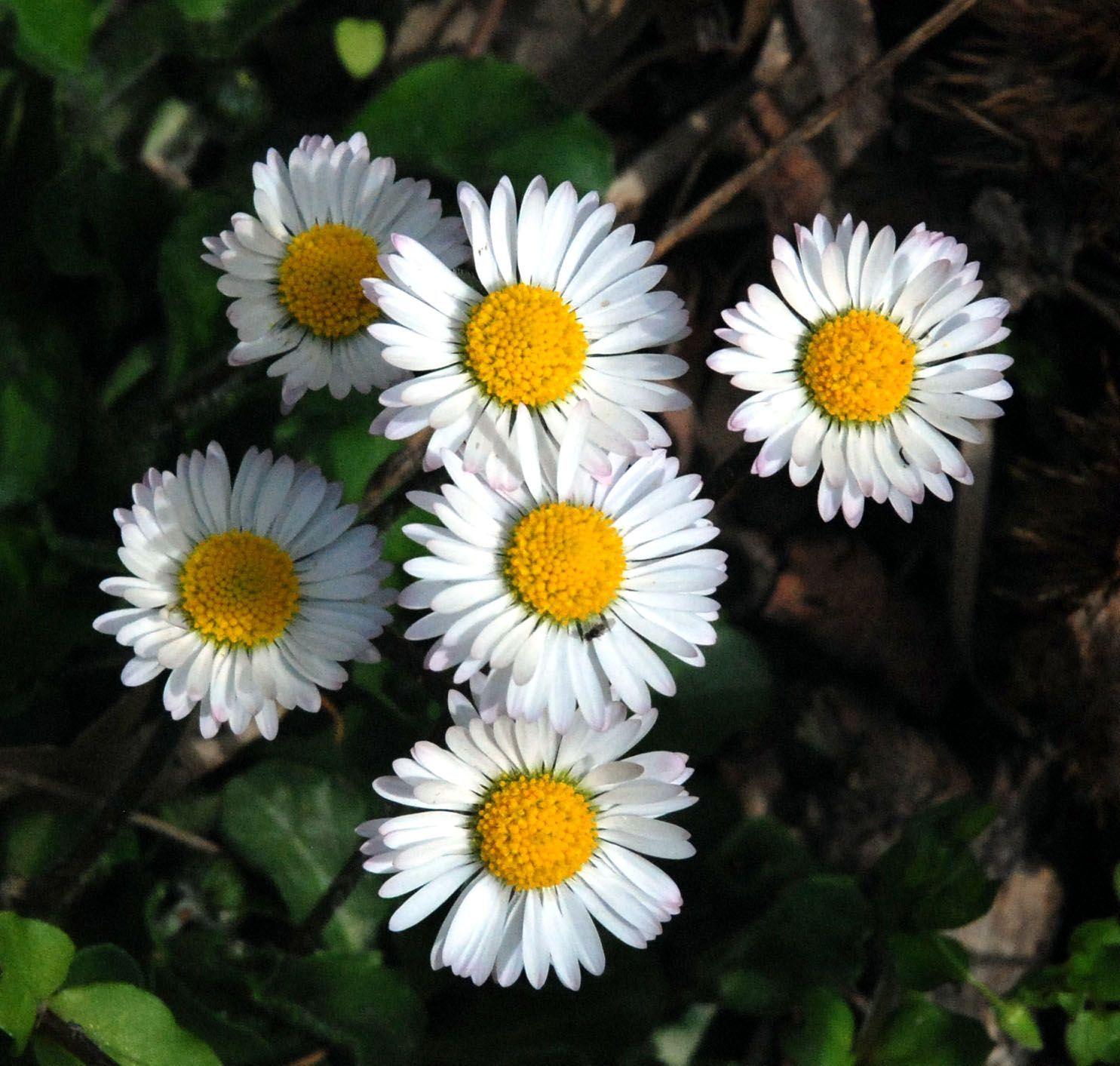 http://cheznectarine.c.h.pic.centerblog.net/o/8f1c76bb.JPG